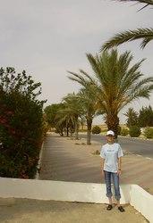 A pálmafákkal szegélyezett út