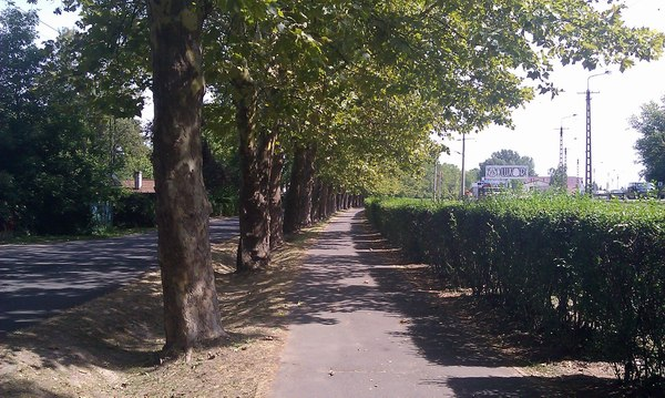 A Platán-sor Balatonbogláron, a jobb oldalán a napsütötte gyalogút
